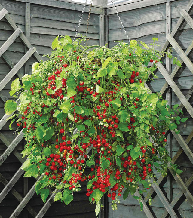 Perfect Hanging Baskets Of Vegetables ...