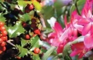 top-10-xmas-plants