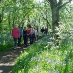 bluebellwalk