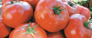 top-ten-tomatoes