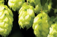 New-brewery-supplier-opens-in-Peterborough