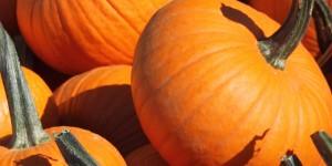 pumpkin_cropLarge