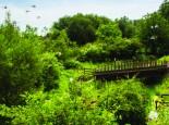 wildlifehaven