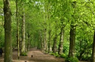 forest_stock