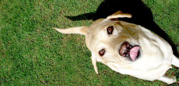pet queries, vets, vet answers, Peterborough vets, dogs' teeth, raw food diet pets
