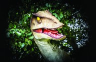 Raptor, Adventure Hunter Parties , Peterborough, Museum, Vivacity Peterborough