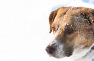 pet tips, winter, pets in winter, Peterborough vets