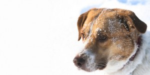 pet tips, winter, pets in winter, Peterborough vets