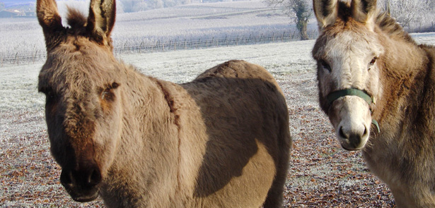 vets, vet tips, dogs and chocolate, Peterborough vets, Christmas, donkeys