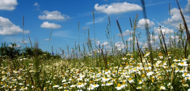 Peterborough Wildlife Festival, Sunday, 1 & Monday, 2 May, all day, Ferry Meadows