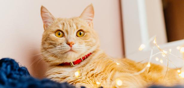Pet Answers Christmas Pets News Pets The Moment Magazine