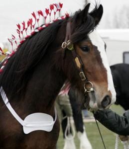 Shire Horse Spring Show